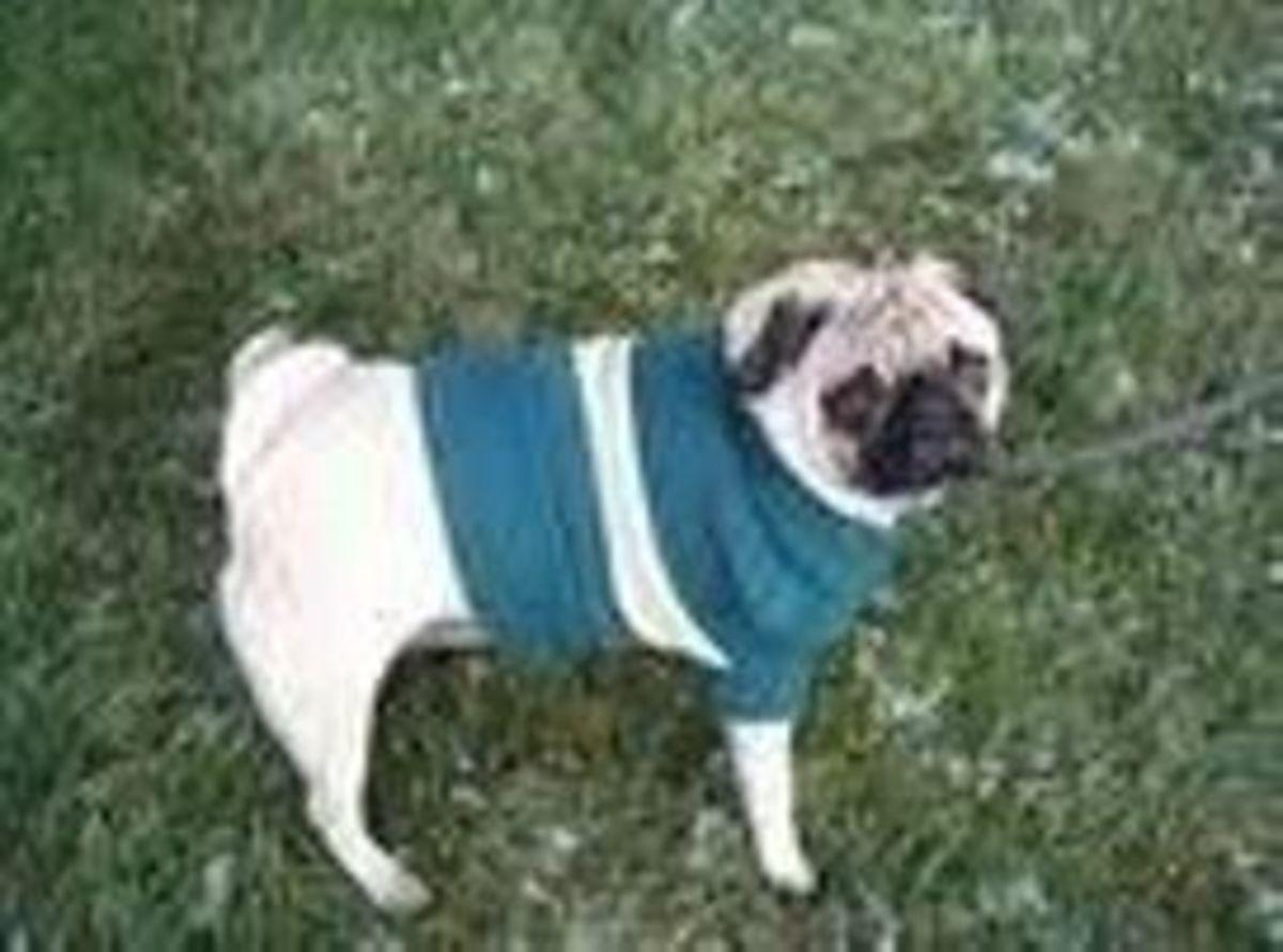 C-Man in his Fall Sweater