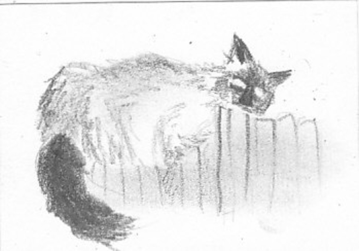 Three minute drawing of Ari Cat by author