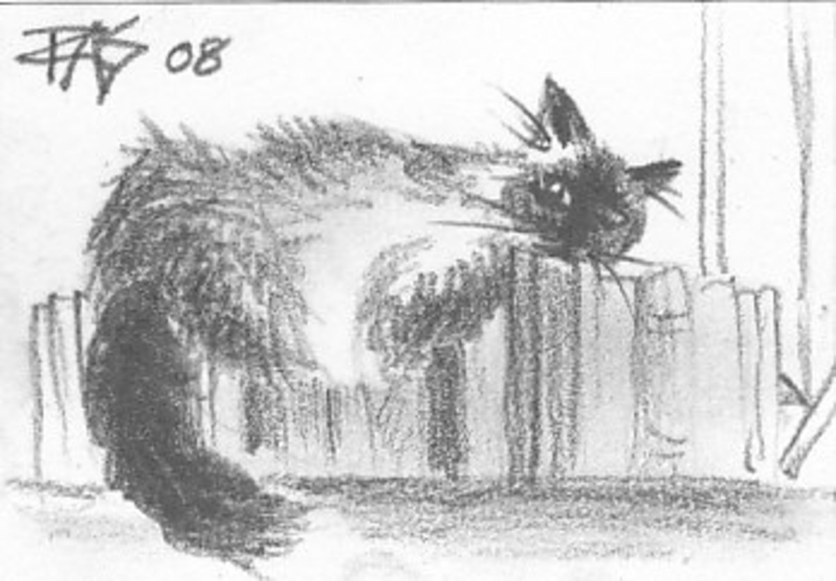Bookshelf Cat, Five Minute Art by Robert A. Sloan