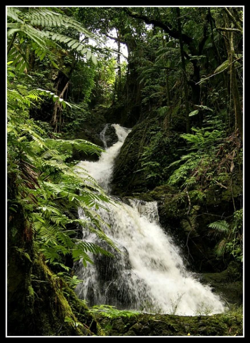 Onomea Falls at the Hawaii Tropical Botanical Garden