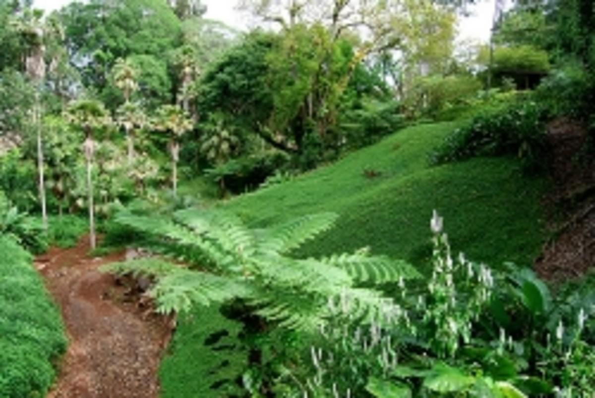 The Best Hawaii Botanical Gardens