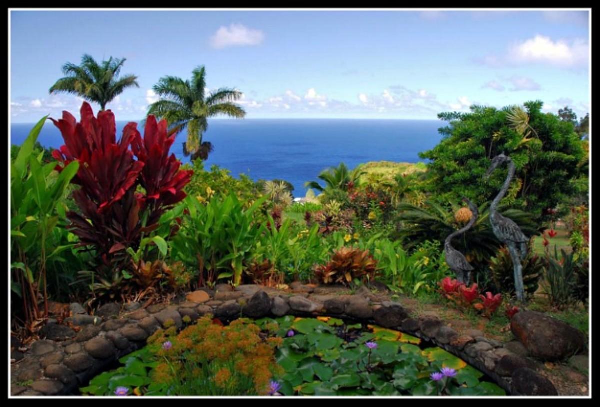 Maui Garden of Eden Pond