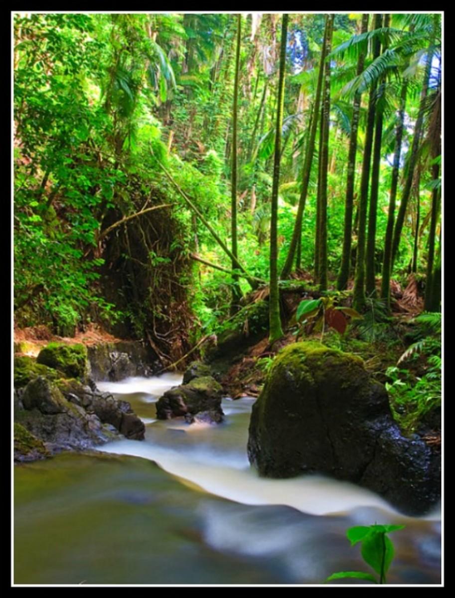 Onomea Creek at the Hawaii Tropical Botanical Garden