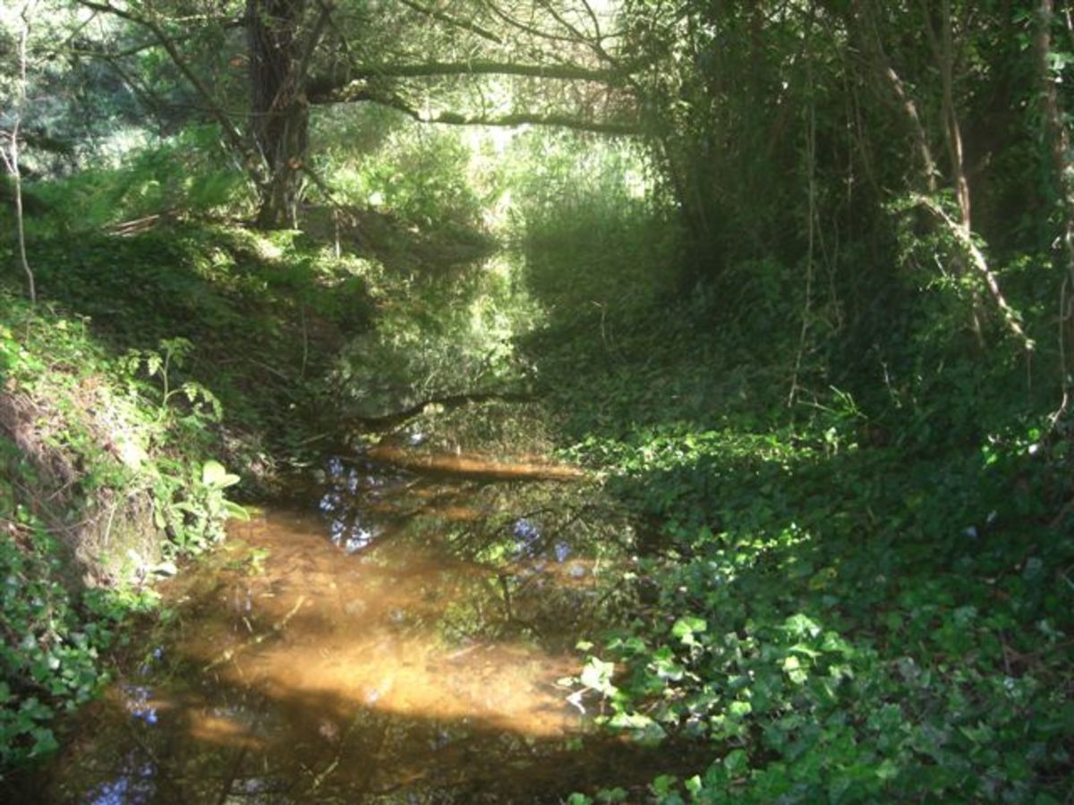 Streambed Before Restoration