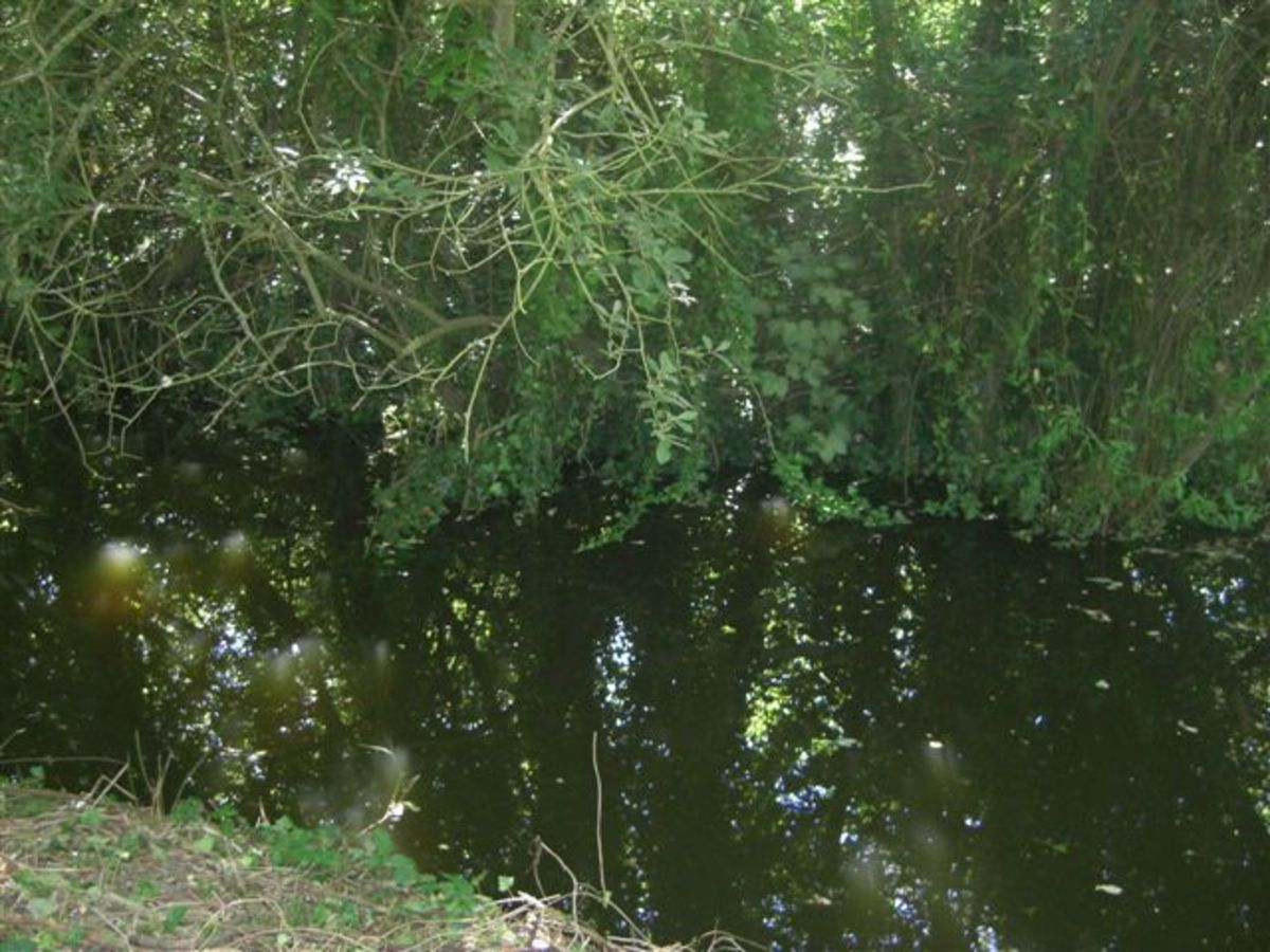 A Section of the Connecting Stream