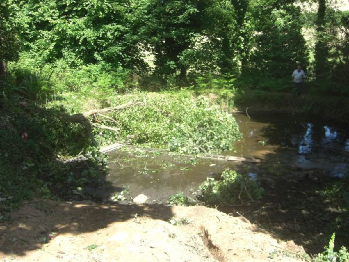 Removing Overgrowth from Main Pool