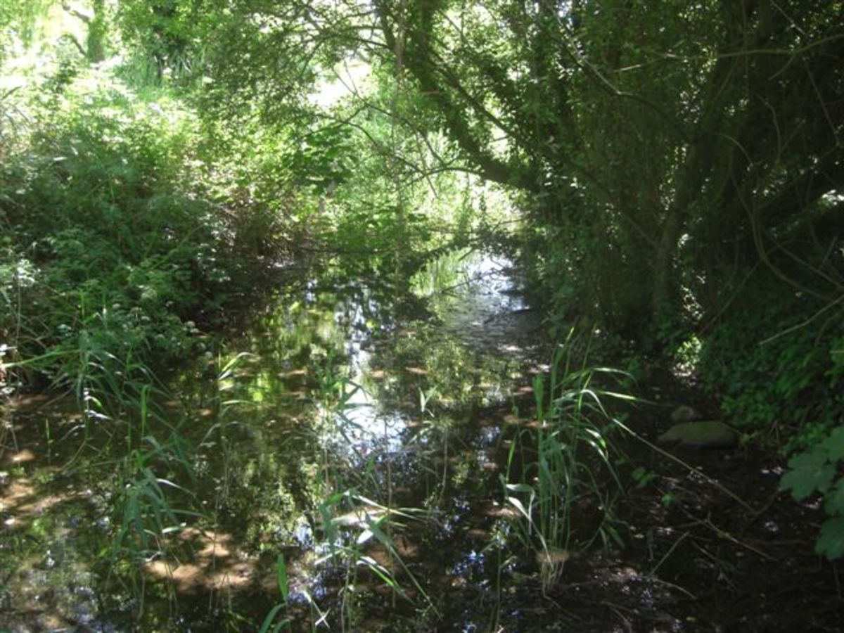 Streambed Before Reeds and Rushes Cleared.