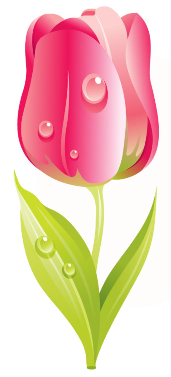 free pink tulip flower clip art