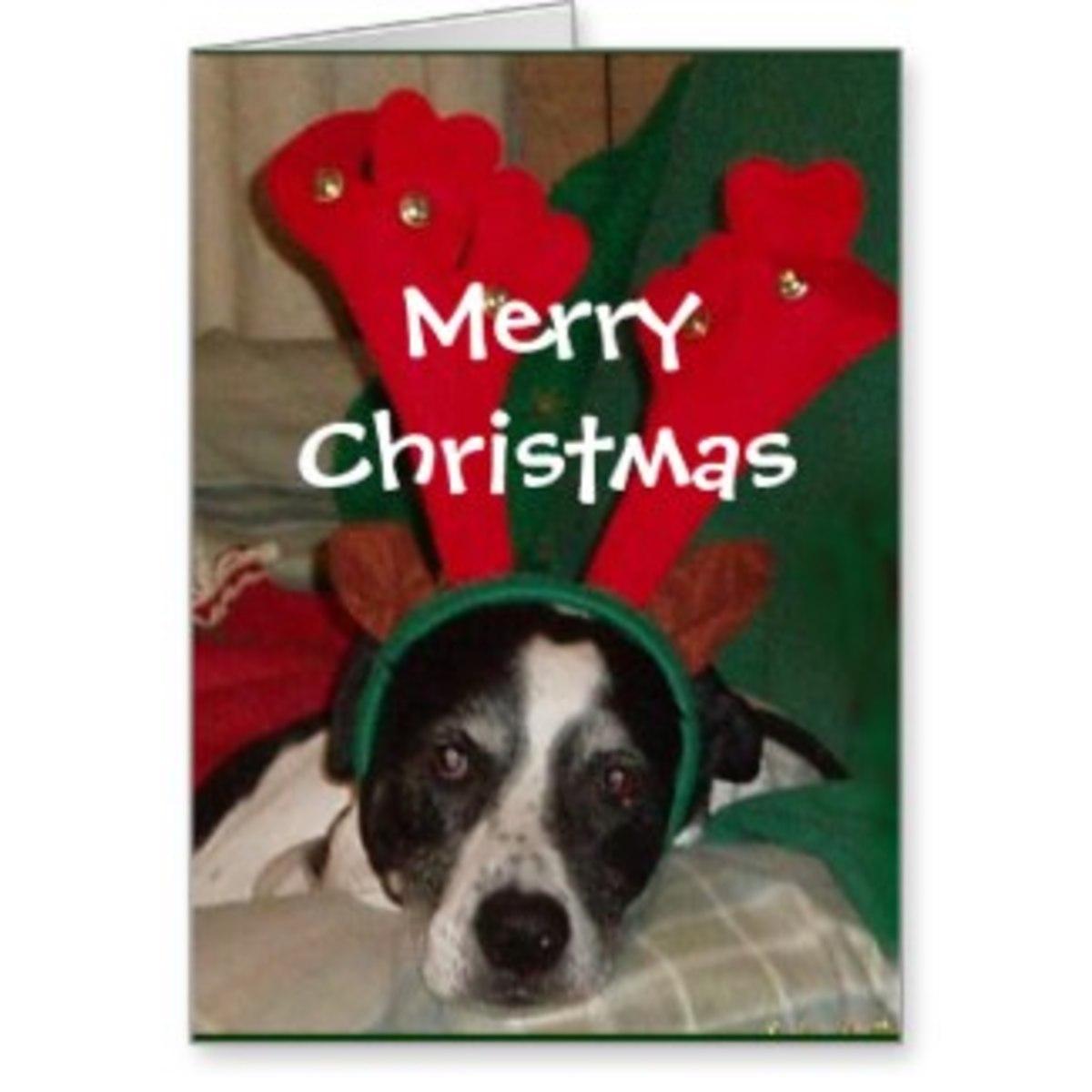 Happy Holidays cher!