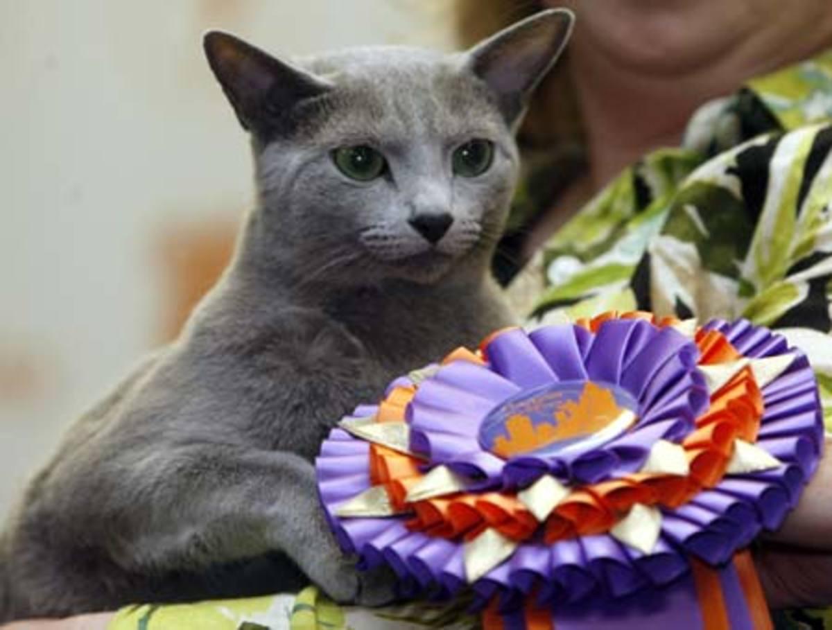 cfa-iams-cat-championship-competition-report