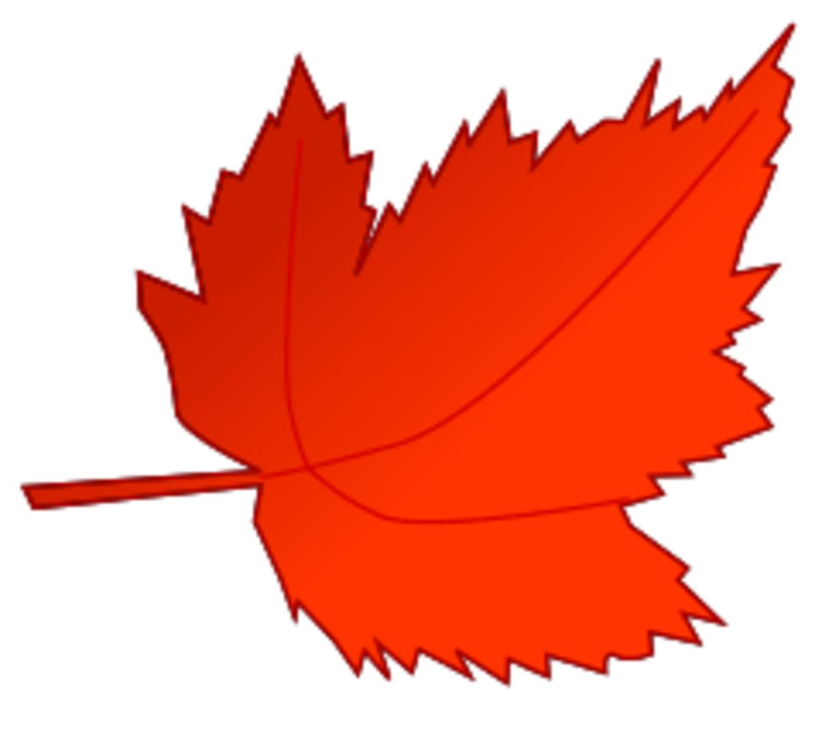 Red Leaf in Fall