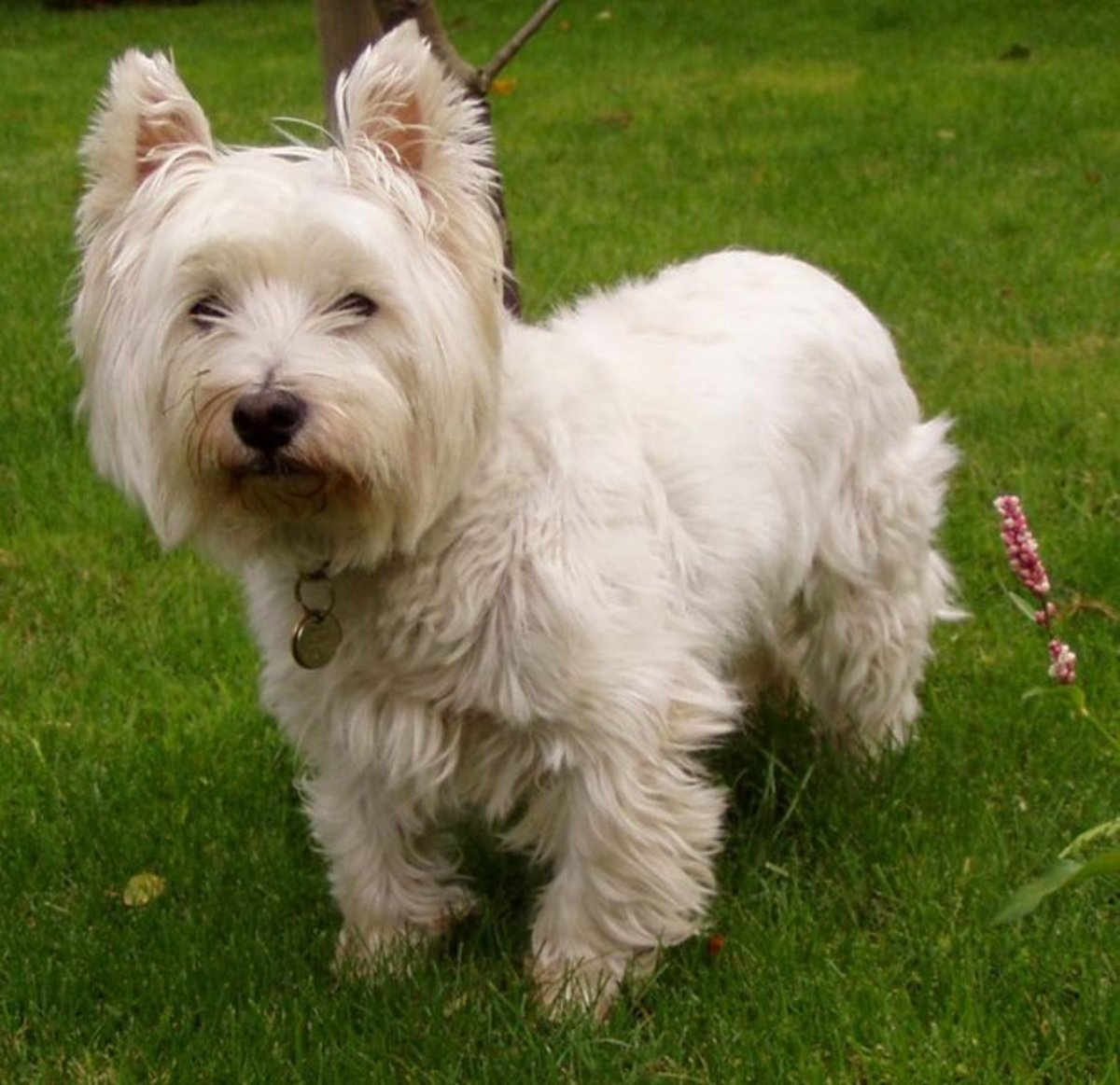 Hypoallergenic Dogs | Dog Breeds Picture