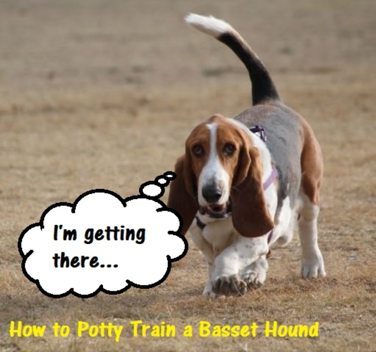 how-to-housetrain-your-puppy