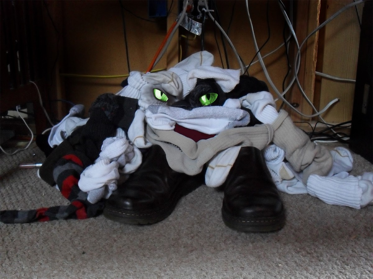 Photo Of Sock Monster Captured. See His Eyes In Photo. Is This The Monster That Is Eating Your Socks.