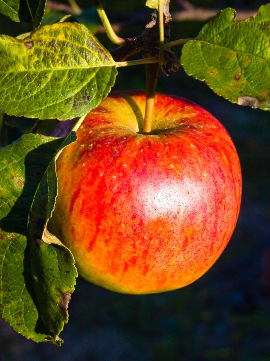 Apple Cider Vinegar Wonder Remedy