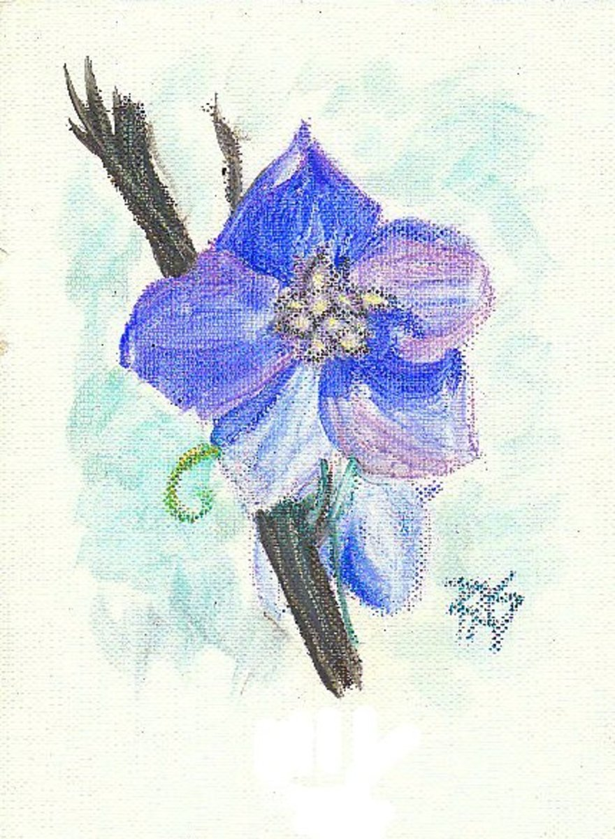 Blue Delphinium, part of a floral series of studies and sketches by Robert A. Sloan