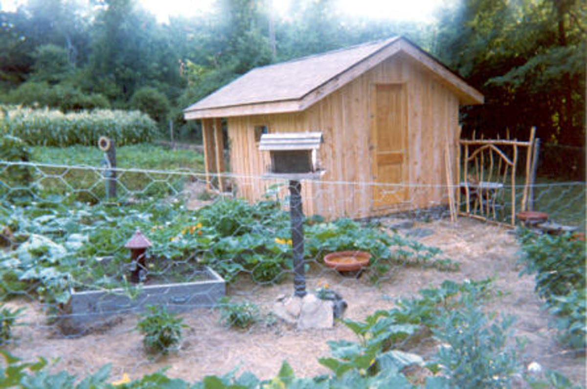 Our garden and chicken house on RamCat Farm