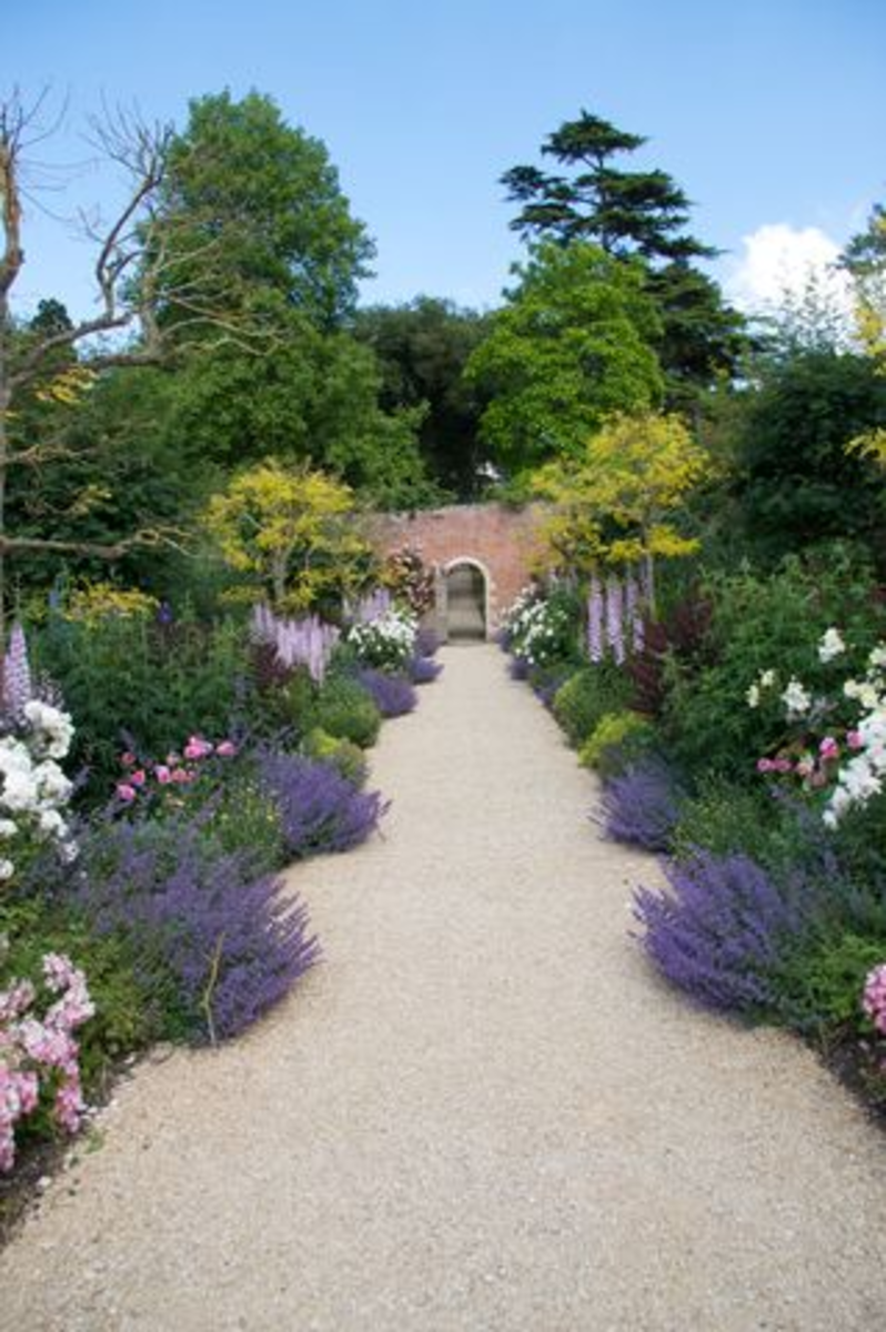 English Lavender Garden Path
