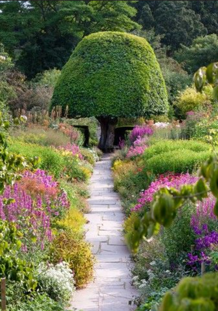 flagstone path with topiary tree focal