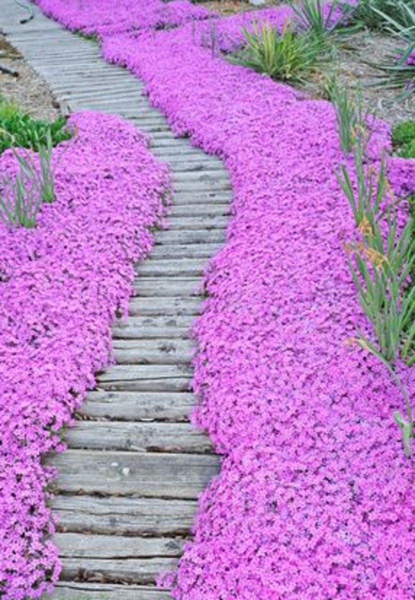 Wood Path border by Pink Flowers