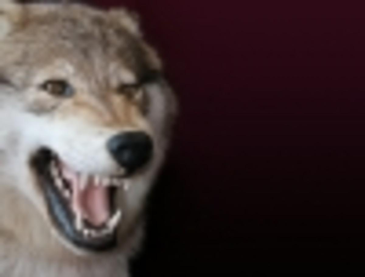 8-ways-to-get-to-werewolf-heaven