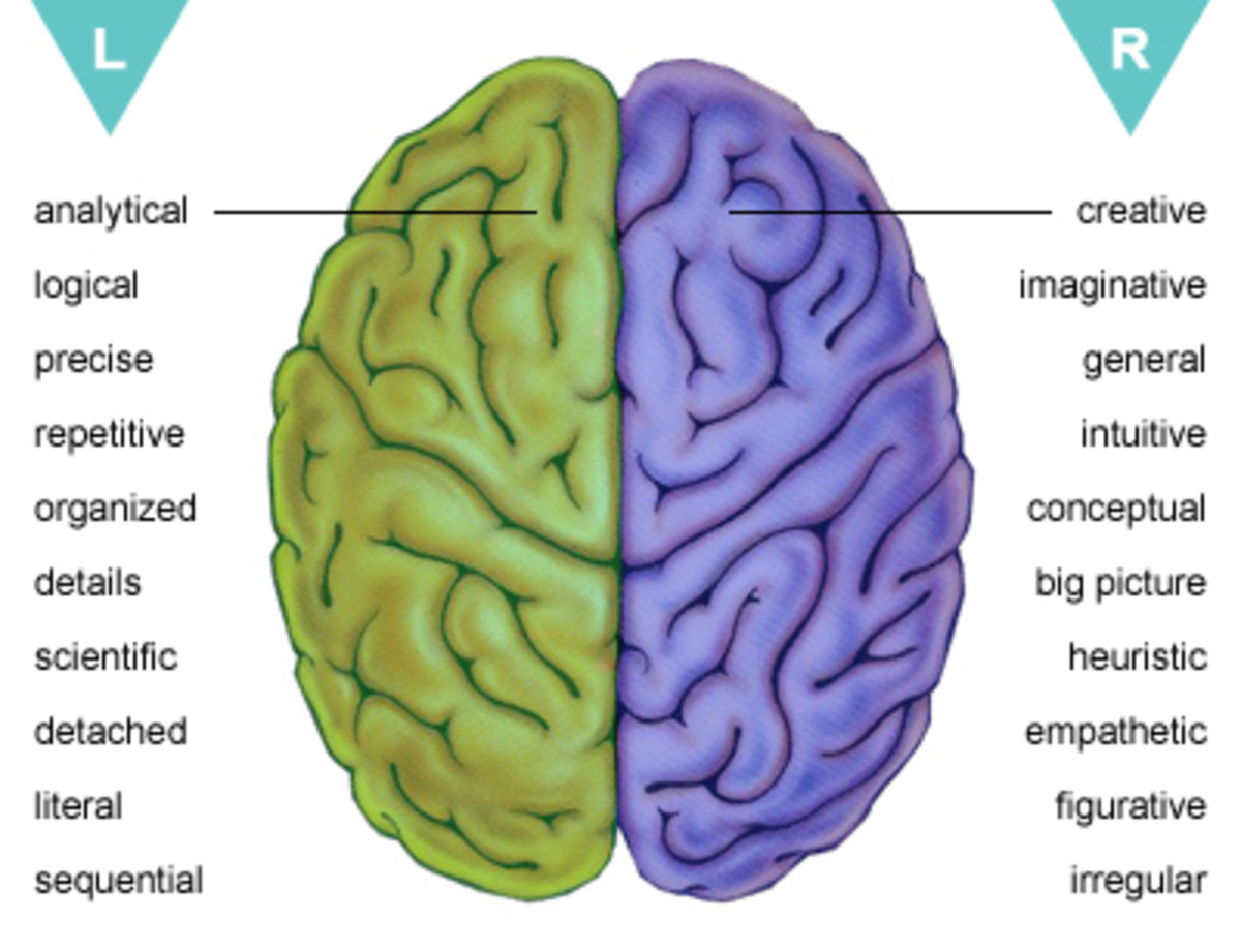 The 2 hemispheres with their cognitive functions