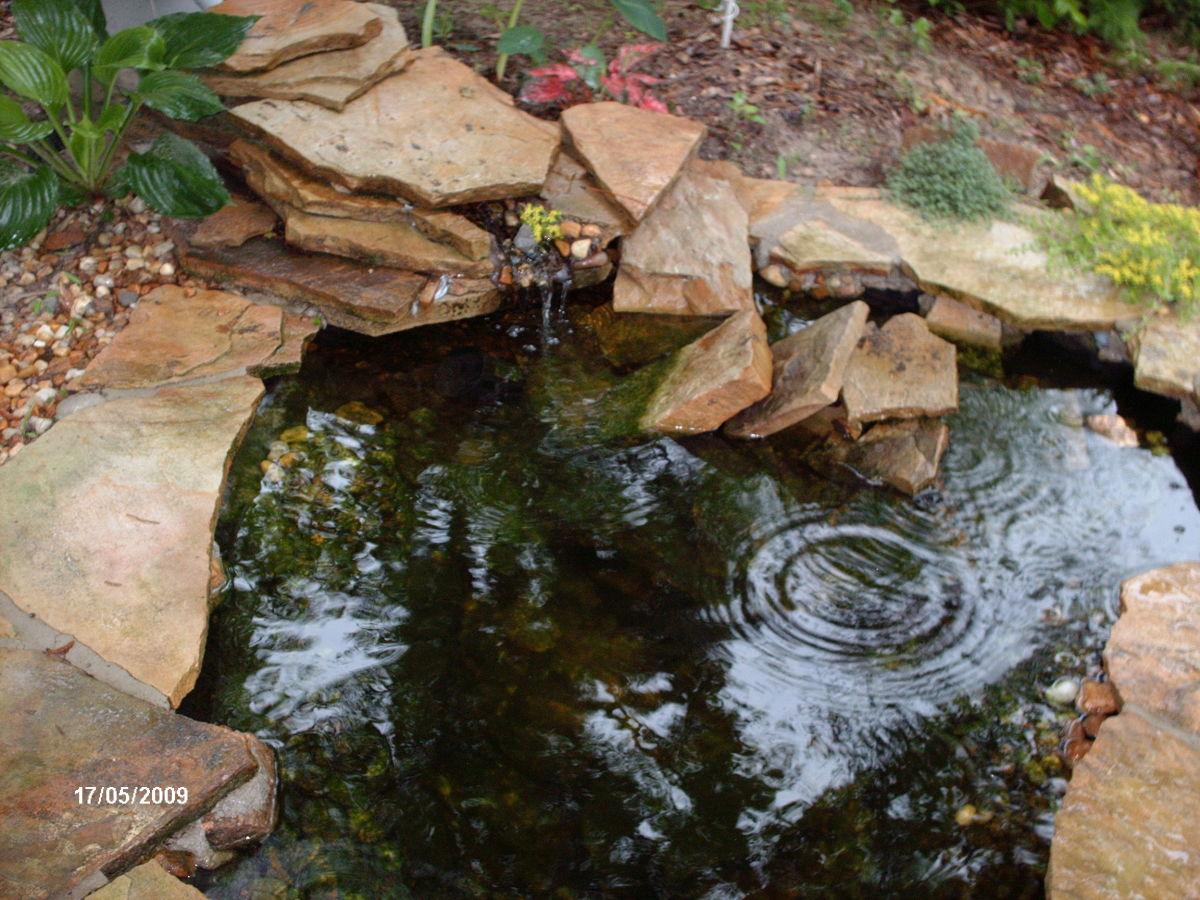 Very Small Backyard Pond : Small Pond