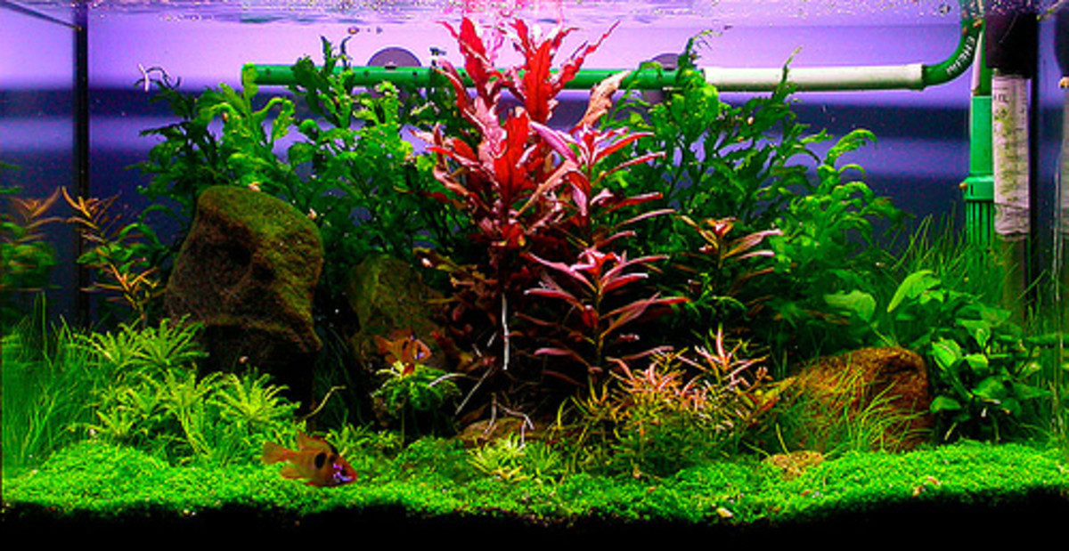Ideas on creating a beautiful freshwater aquarium.