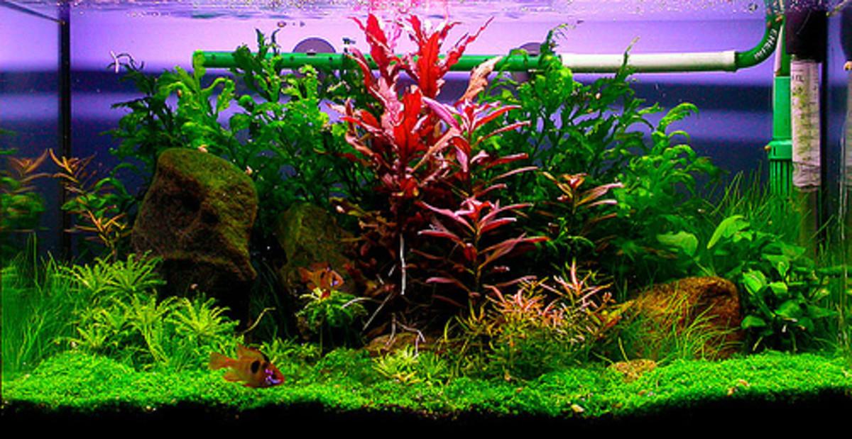 Beginning Freshwater Aquarium Fish