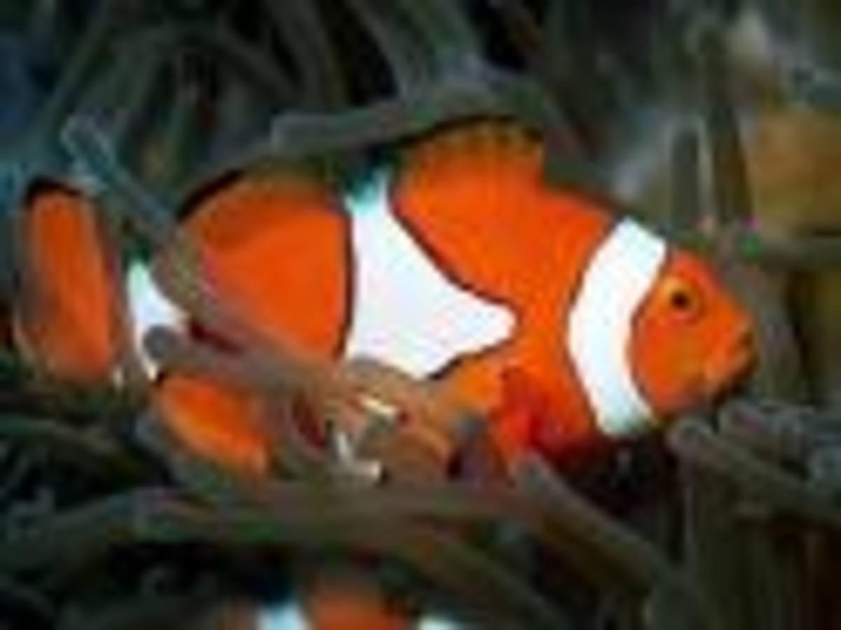Dream of Fish