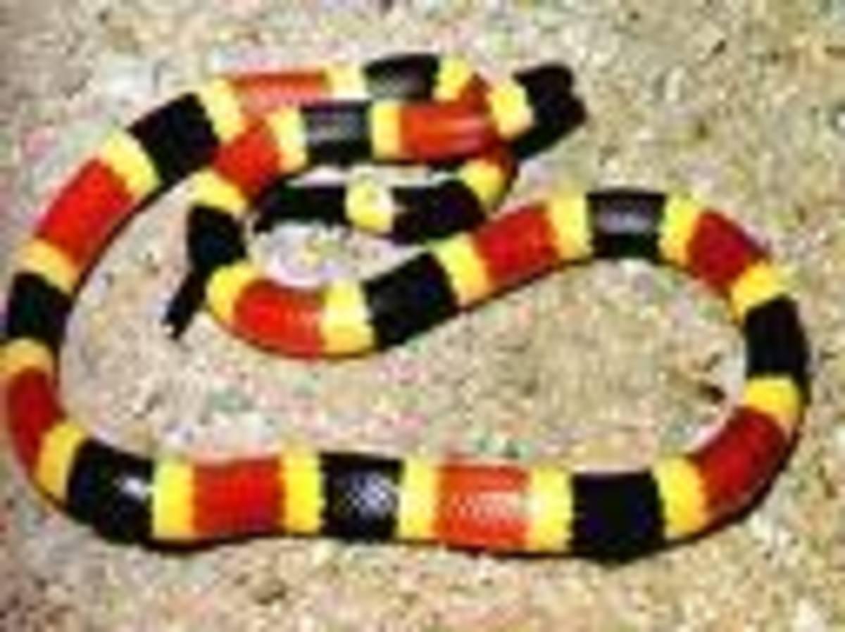 Dream of Snake