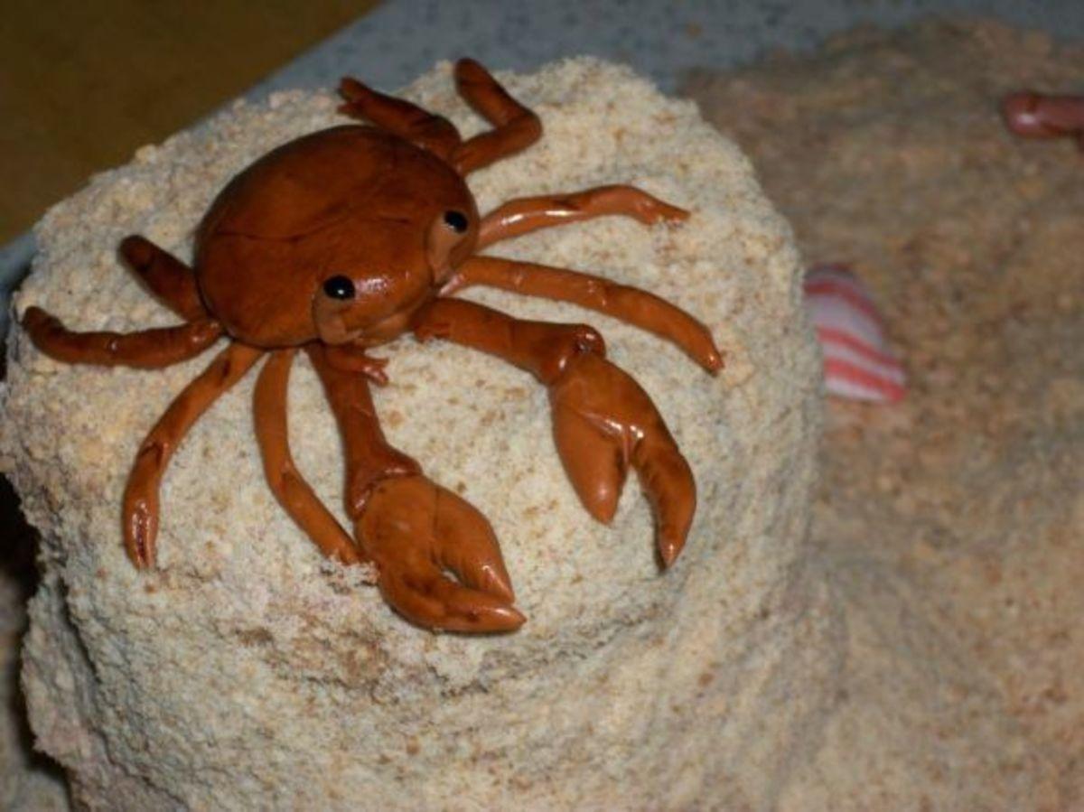 Cute gum paste crab
