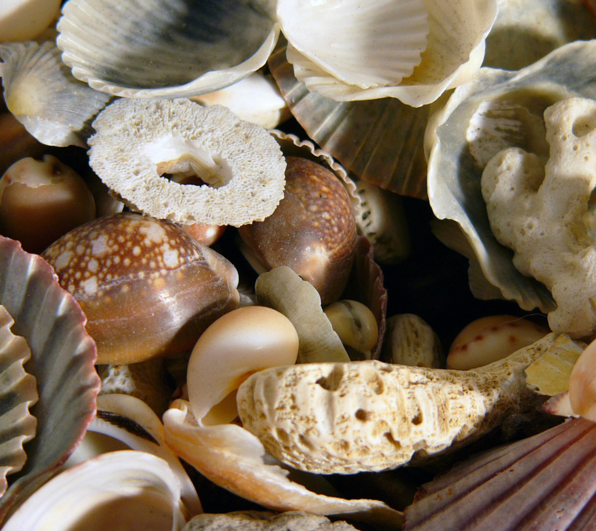 Shells, coral, and sea sponges are sold at craft stores for decorating. Get a good deal and give them a better purpose!