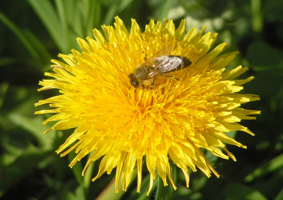 Hermit crabs will enjoy many wild plants that you can harvest for free, even some, such as Dandelions and Purslane, that most people consider to be weeds.