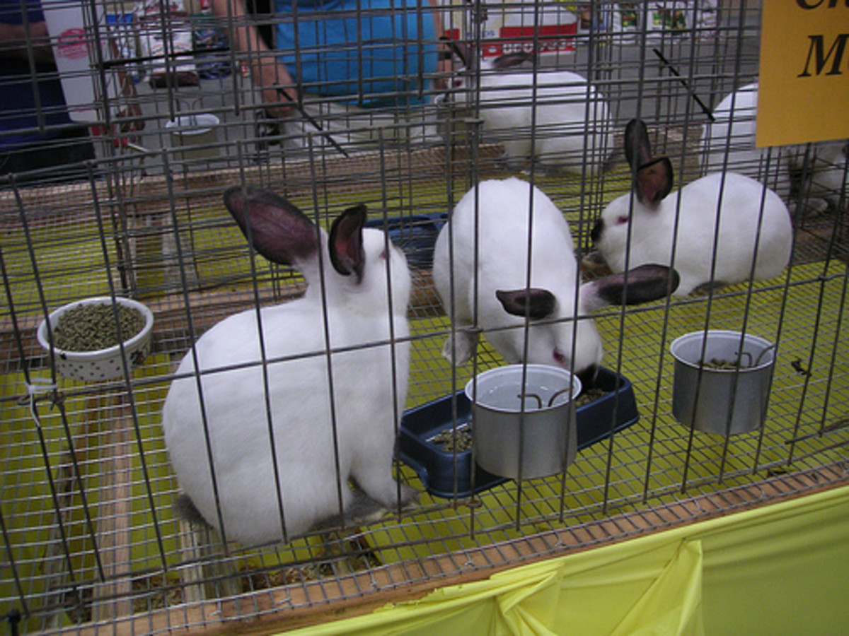 Cash Crops for Small Farms: Rabbit Manure