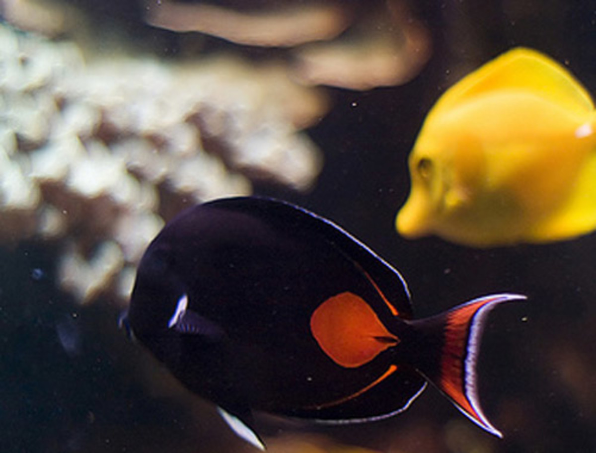 Achilles tang - Facts On The Stunning Achilles Tang