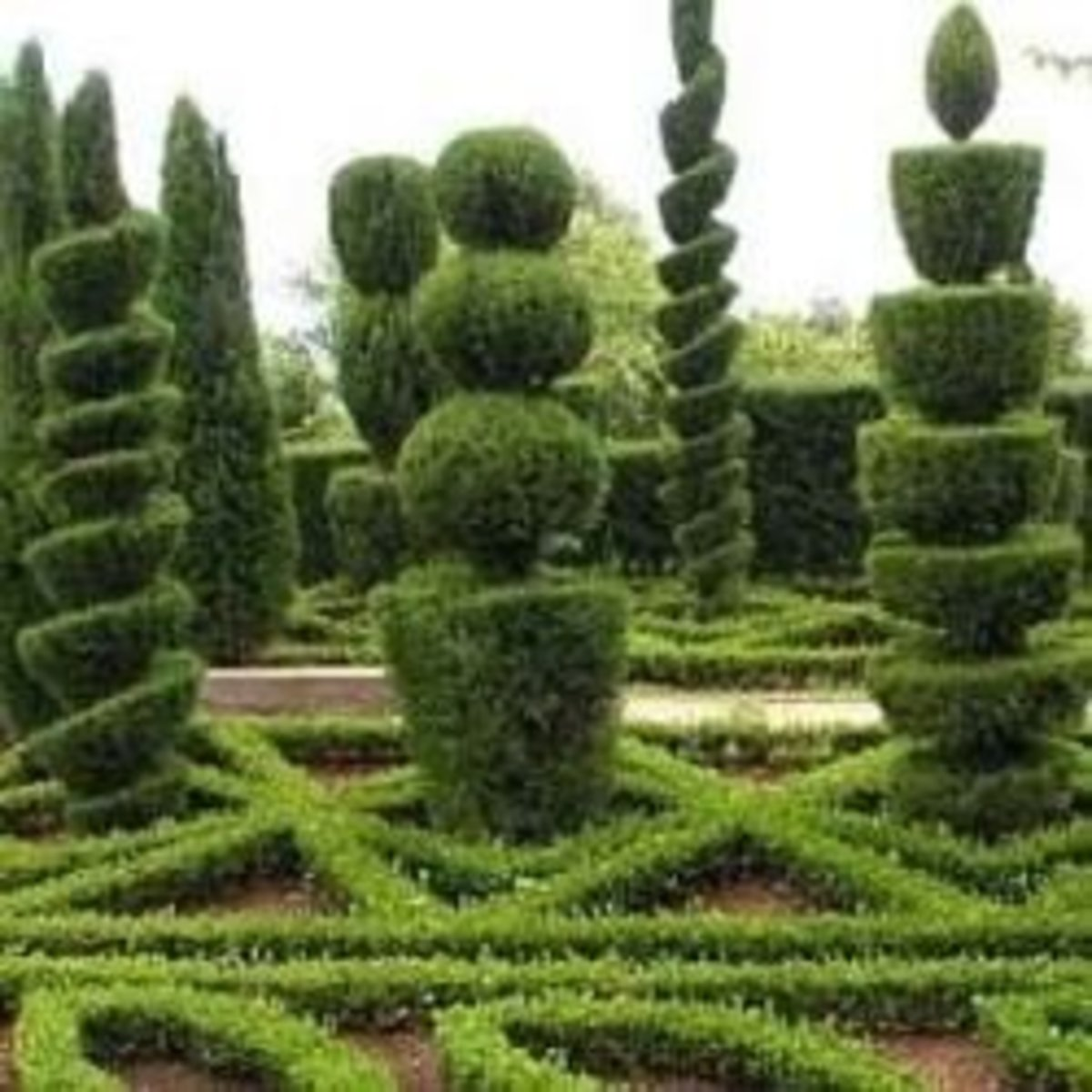 The Art Of Topiary: Get Inspired