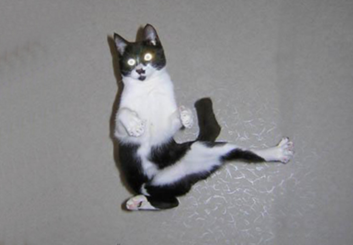 and a Karate Cat!
