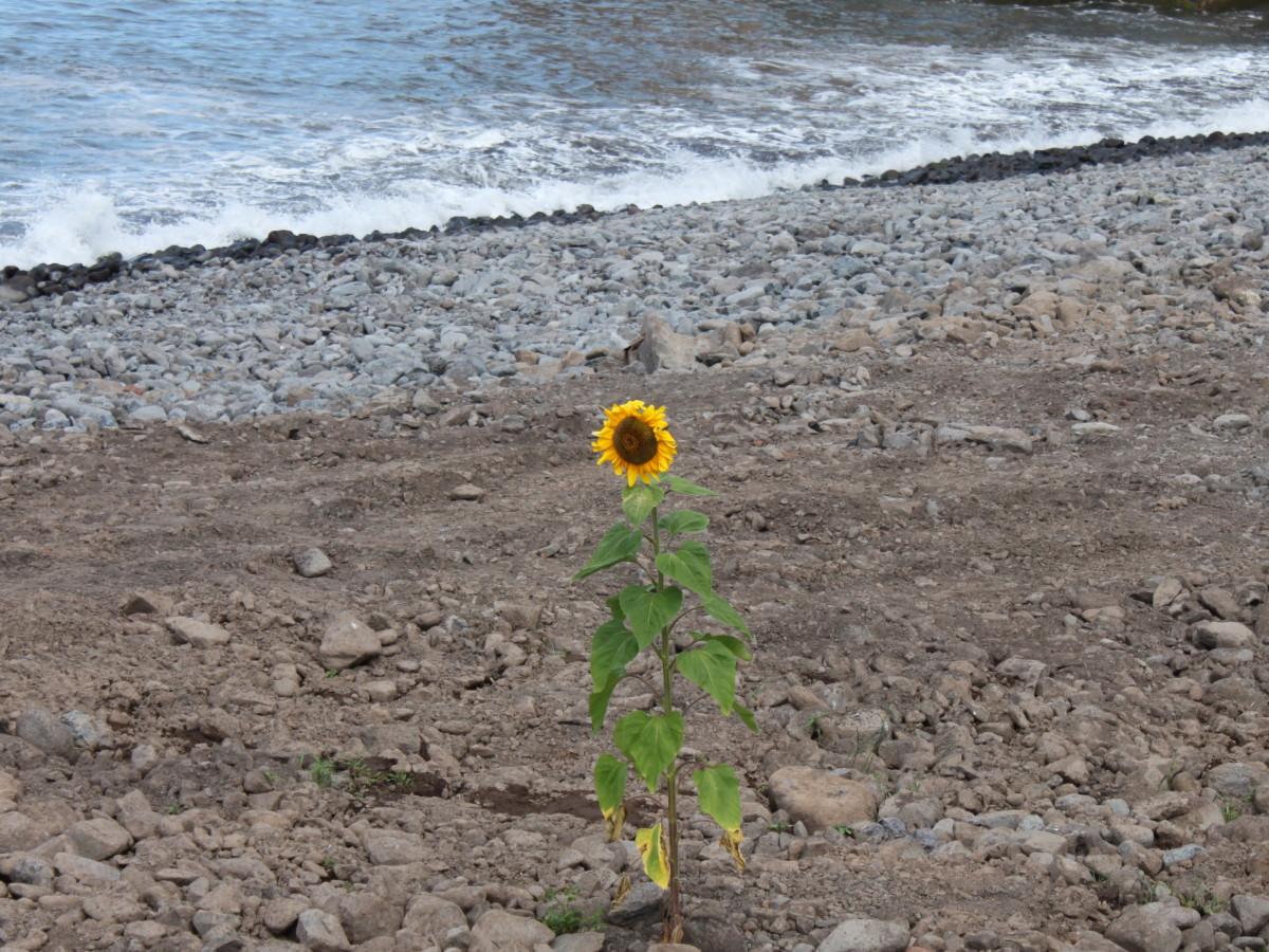 Sozinha Na Praia