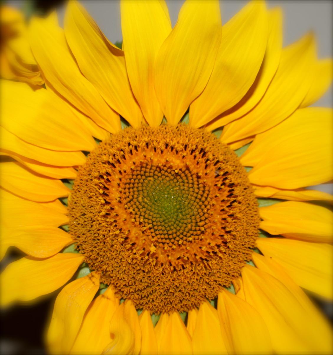 fabulous-flowers