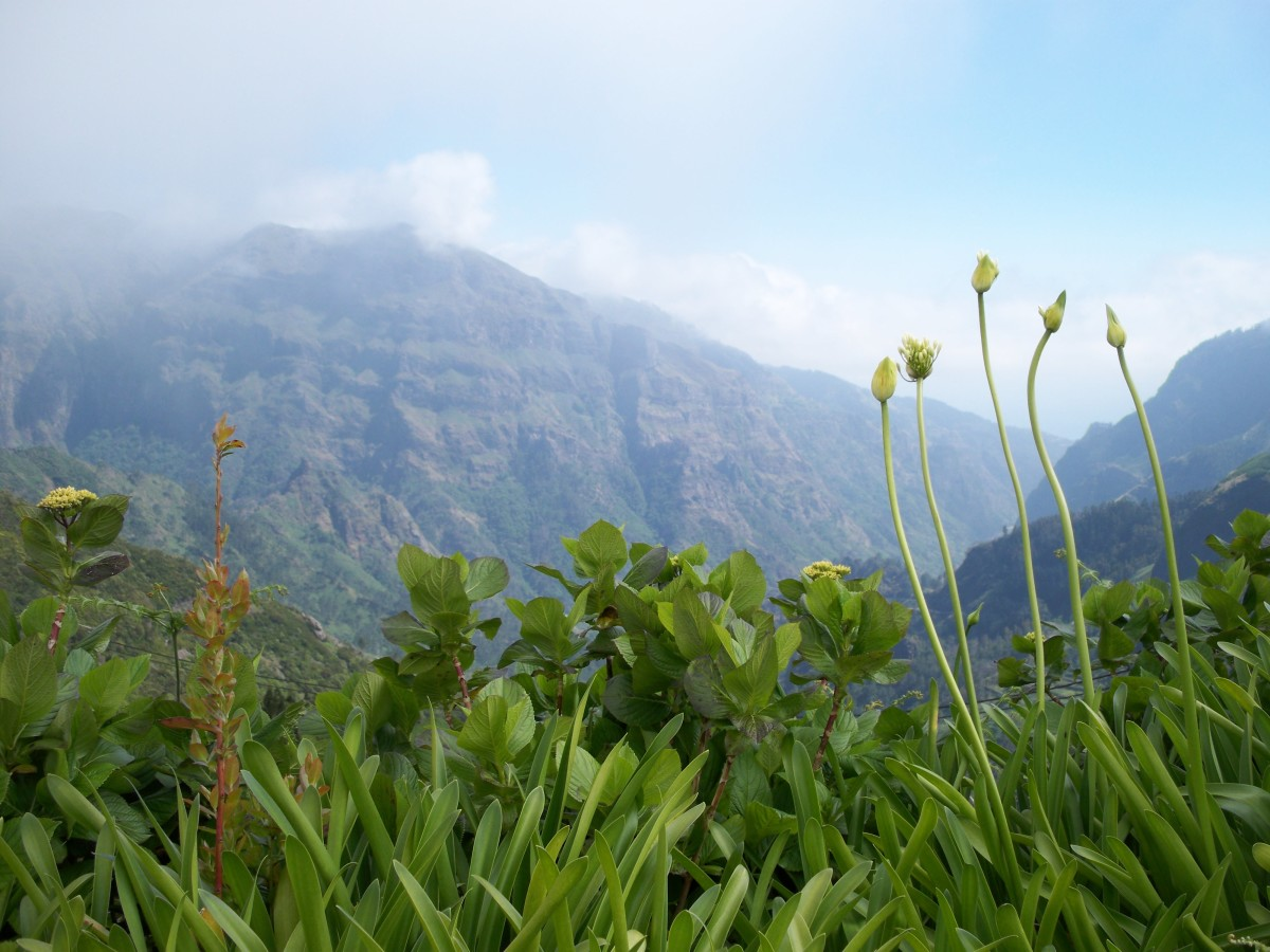 Pictures of Flowers From the Island of Madeira From Mountains to Markets...