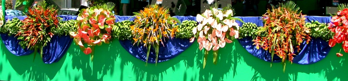 Estrelicia And Flamingo Flower Display