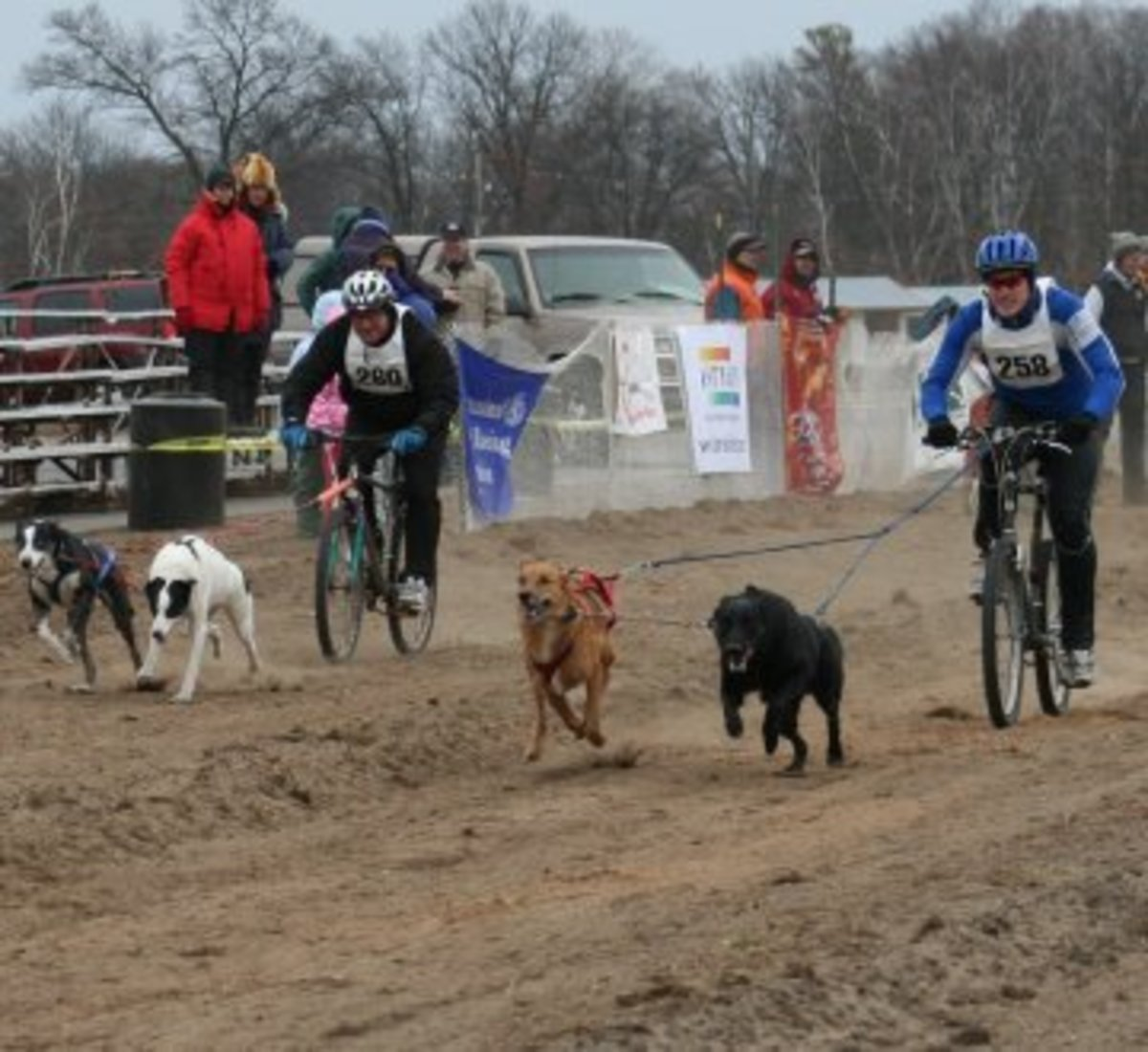 Dog Sports - What Is Bikejoring?