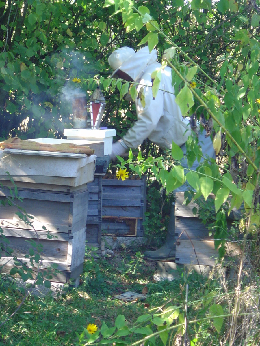 Feeding our bees ready for winter.Our bees produce the most divine honey for breakfast.