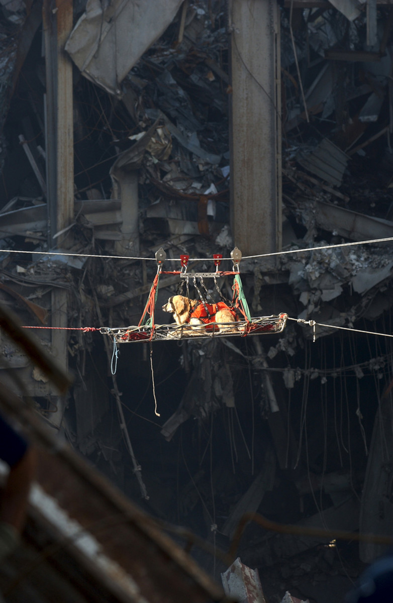 A search and rescue dog in the ruins of the World Trade Center. This picture shows the bravery, the trust, the dedication they hold for us. Humans couldn't safely go where this hero is heading.