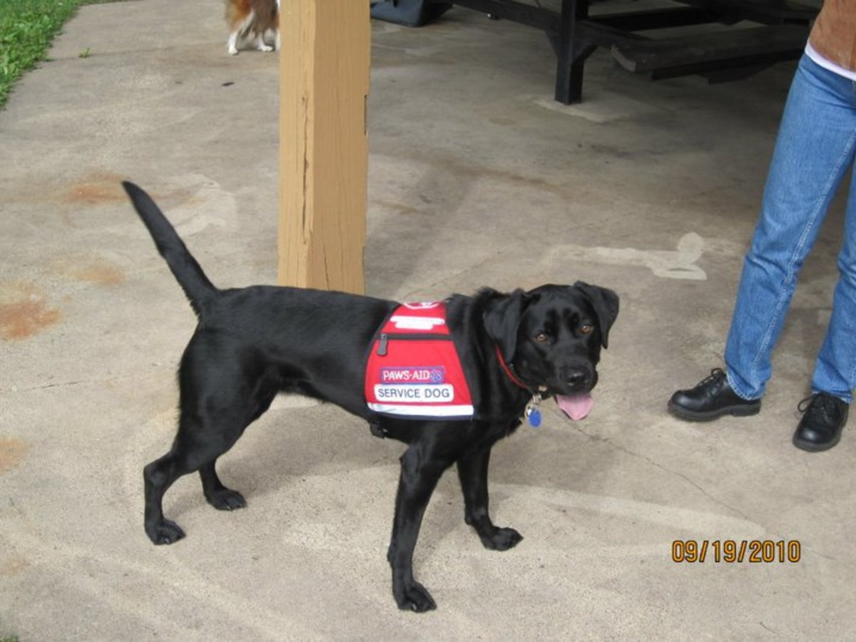 River, in her service dog working vest