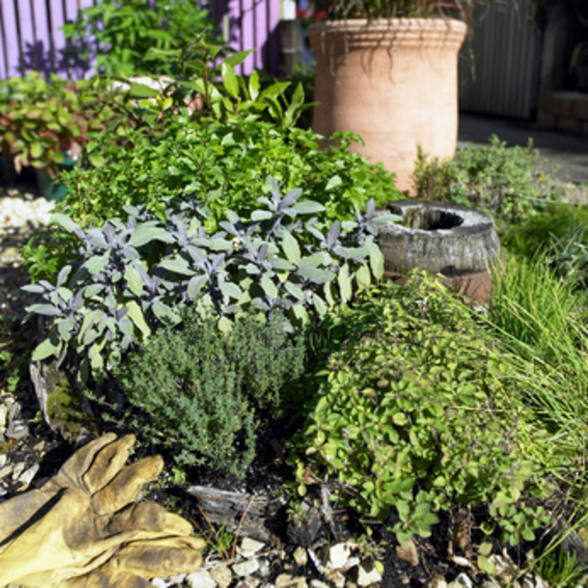 Start Your Own Herb Garden