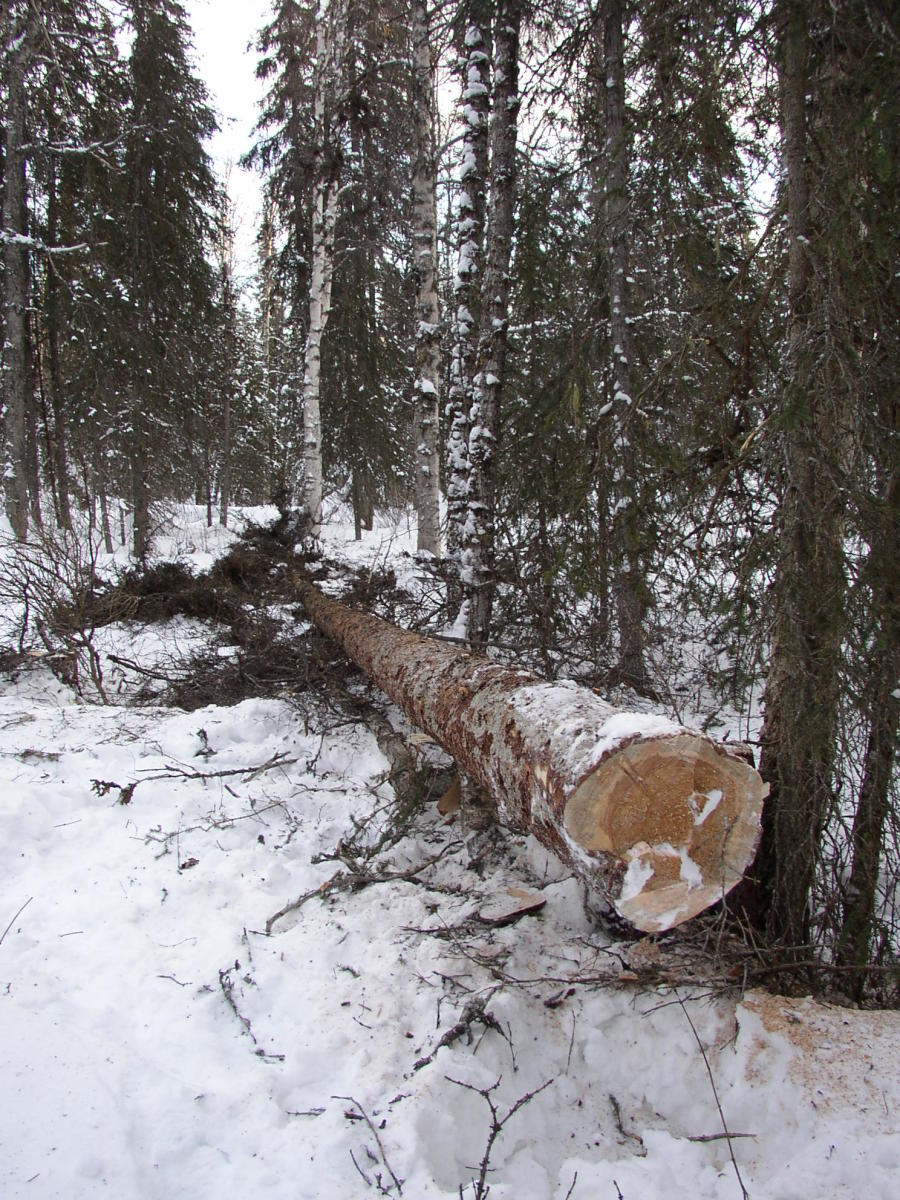 using-a-chainsaw-in-snow-cold-weather
