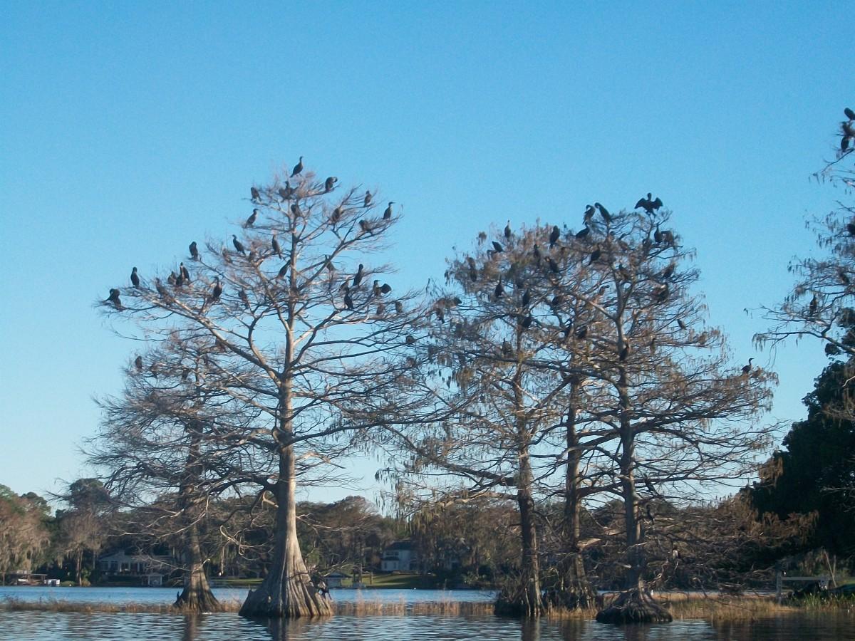 Many, many birds