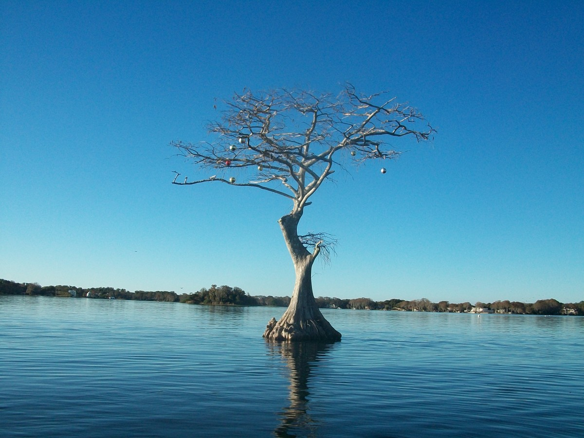Tree in the middle of the water
